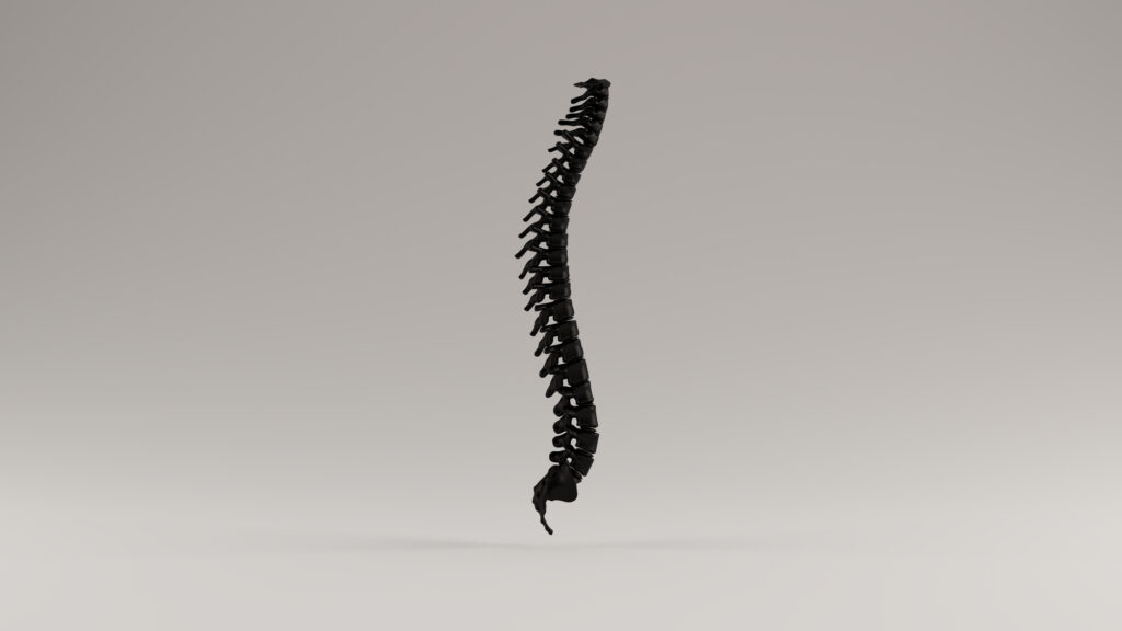 Importance Of Spinal Curves